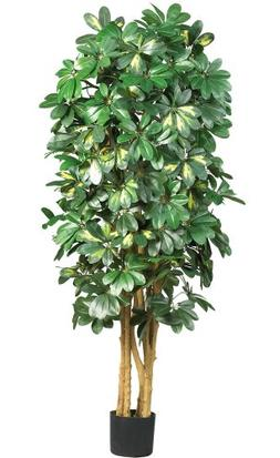 Nearly Natural 5202 Schefflera Silk Tree, 5-Feet, Green