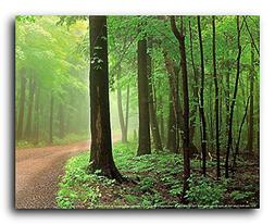Door Bluff County Park Wisconsin Forest Paths Tree Scenery W