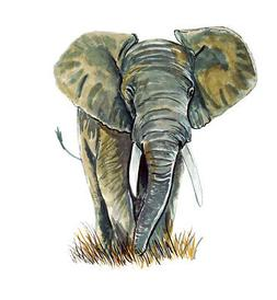 African Elephant Endangered Species Wild Life Home Office Ro