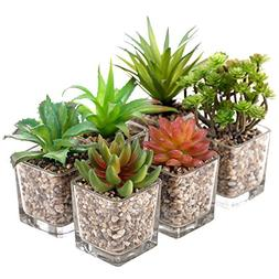 MyGift Assorted Tabletop Artificial Succulent Plants in Glas