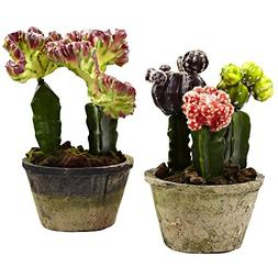 2Pc Colorful Cactus Garden Set