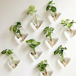 Creative Wall-Hanging Glass Vase for Hydroponic Plants Home