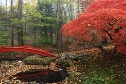 Wallmonkeys Japanese Maple Garden with Red Bridge Peel and S