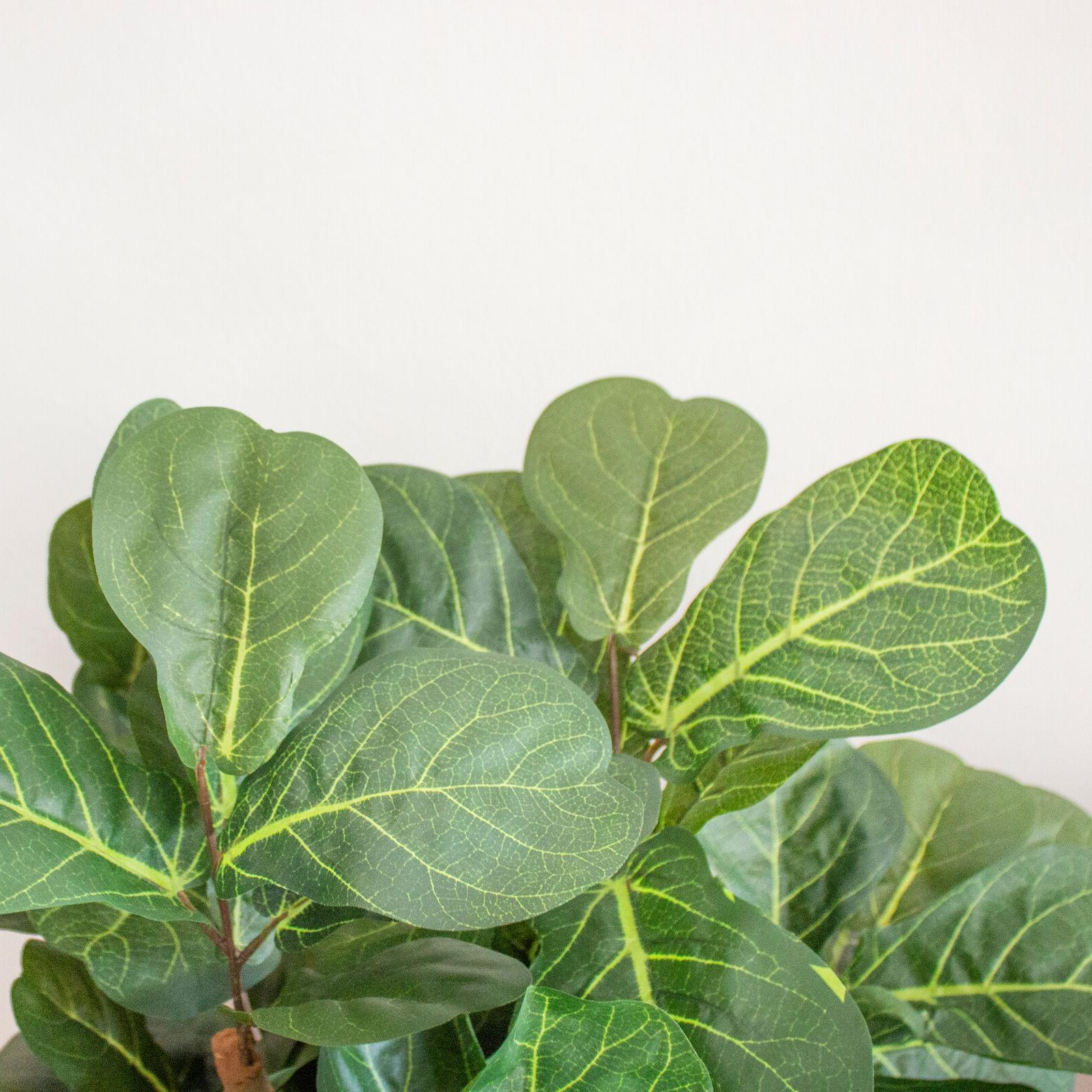 6 Artificial Fig Fiddle Indoor Leaves Office