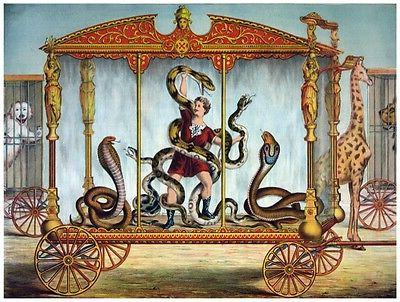 9091 man fighting snakes in rolling cart