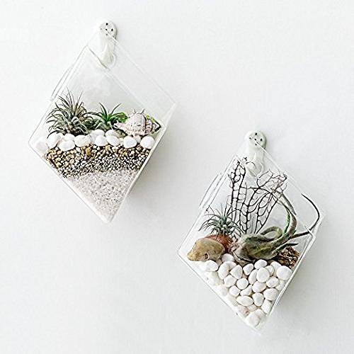 Mkono Glass Wall Mounted Terrariums Air Plant Indoor Living Room Decor