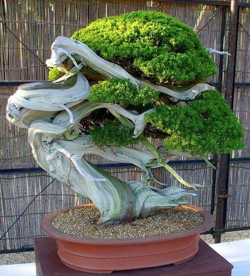 Bonsai Tree Small Plant Home Living Room Office Indoor Garde