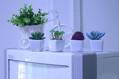 Myartte Home Decor Artificial Shrubs-Set of Different Artificial Succulent Home Decoration