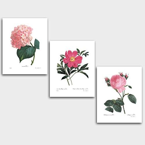 set botanical wall art pink room decor redoute prints unfram