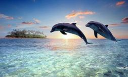 LED Light Up Dolphin - Lighted Canvas Picture Art Home Offic