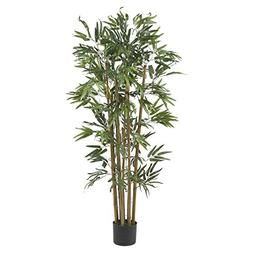 4' Multi Bambusa Bamboo Silk Tree