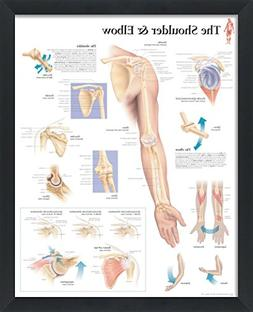 The Shoulder and Elbow Framed Medical Educational Informatio