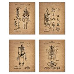 Vintage Human Skeleton Patent Print - Set of Four 8x10 Photo