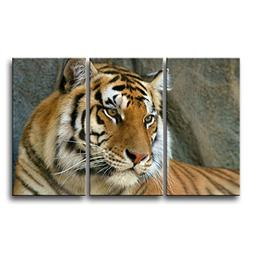 So Crazy Art 3 Piece Wall Art Painting Bengal Tiger Face Clo